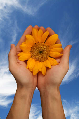 sunny sunflower against fresh blue sky Reklamní fotografie