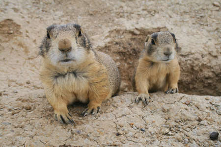 mother and son prairie dogs