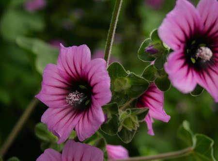 close up purple flower Stock Photo