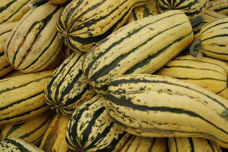 striped fall gourds Stock Photo