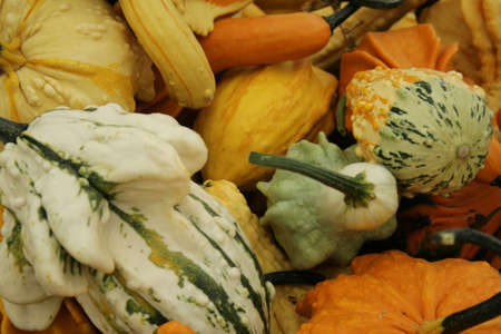 kleurrijke en ongebruikelijke kalebassen Stockfoto