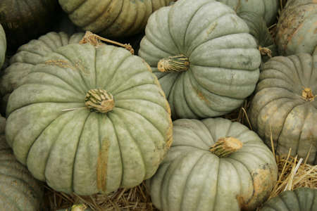 unusual blue pumpkins