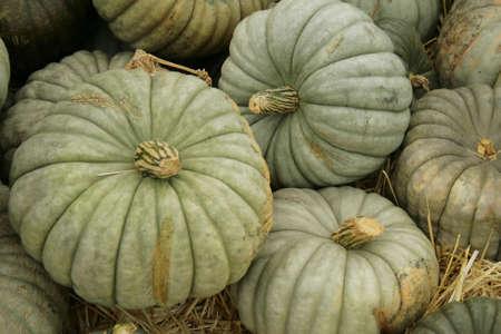 unusual blue pumpkins Stock fotó - 5756205