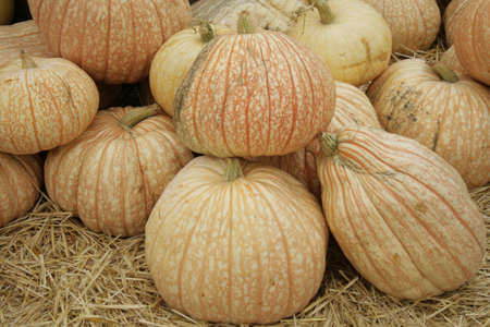 mottled, pale pumpkins