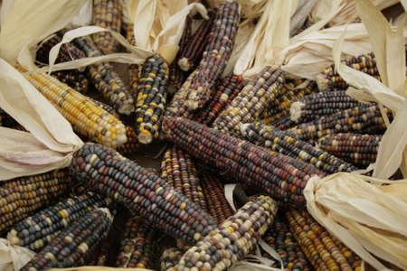 kleurrijke gedroogde Indische corn