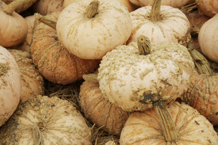 ugly pale pumpkins with warts