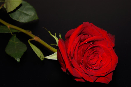abandonment: Red rose with water drops