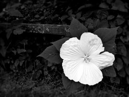 Big white flower Imagens