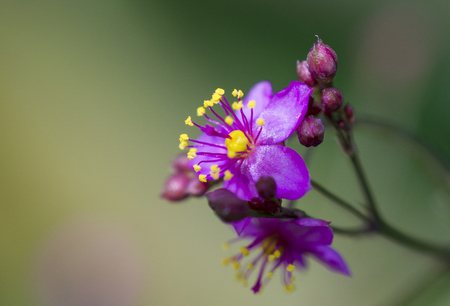 Pink flowers Imagens