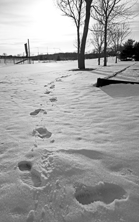 footsteps: Footsteps in the snow