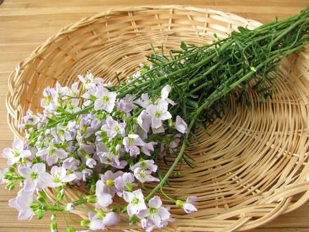 Bunch of cuckoo flower in basket photo