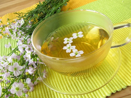 un coucou: Herb tea with cuckoo flower Banque d'images