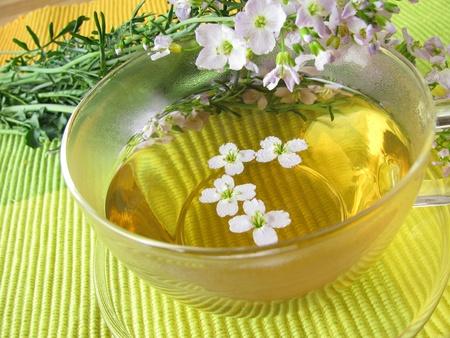 Herb tea with cuckoo flower photo