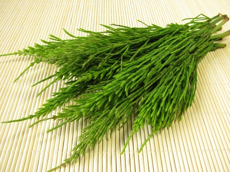 Bunch of field horsetail