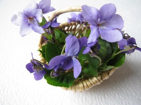 flower basket: Violets in basket