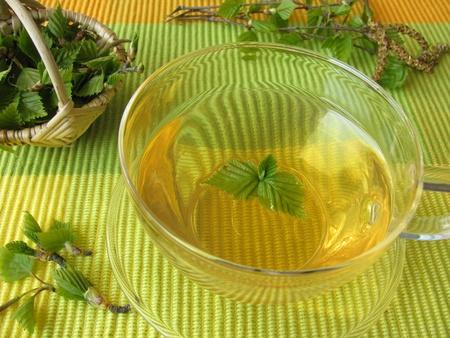 betula pendula: Birch leaves tea