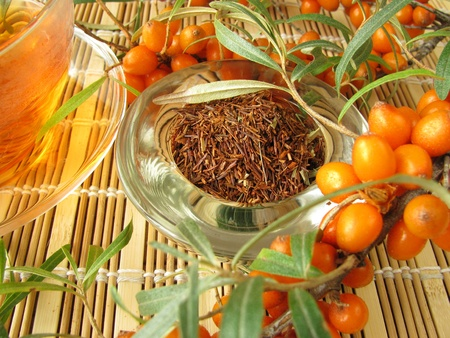 rooibos tea: Rooibos tea with fruits of sea buckthorn Stock Photo