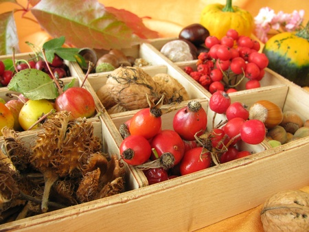 Collecting box with walnuts, chestnuts and other fall fruits Stock Photo - 10706178