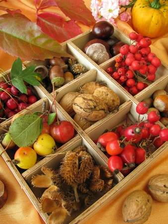 Collecting box with walnuts, chestnuts and other fall fruits Stock Photo - 10706193