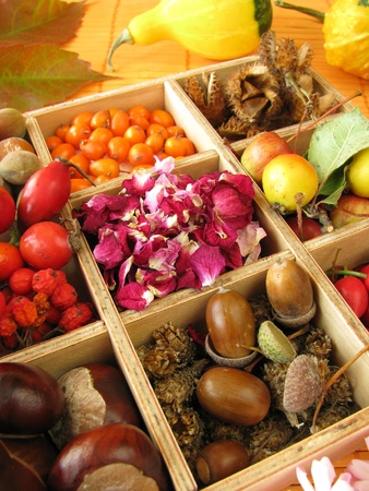 Collecting box with fall fruits and dried rose flowers Stock Photo - 10795644
