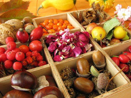 Collecting box with fall fruits and dried rose flowers