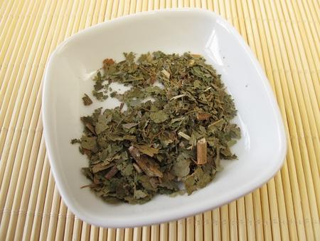 hamamelis: Witch Hazel leaves, Hamamelis folium Stock Photo