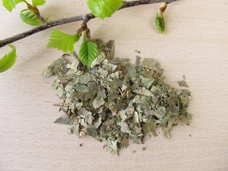 betula pendula: Silver Birch leaves, Betulae folium Stock Photo