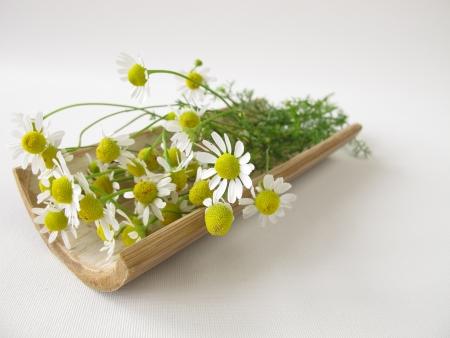 Chamomile flowers photo