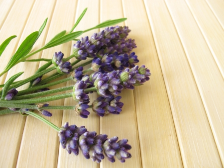 lavender coloured: Bunch of lavender Stock Photo
