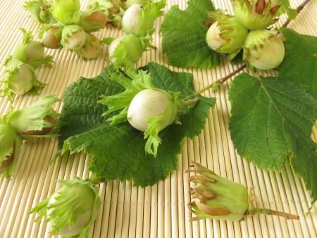 cobnut: Fresh hazelnuts Stock Photo
