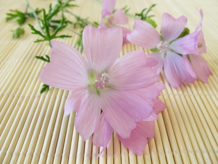 mallow: Bunch with common mallow flowers