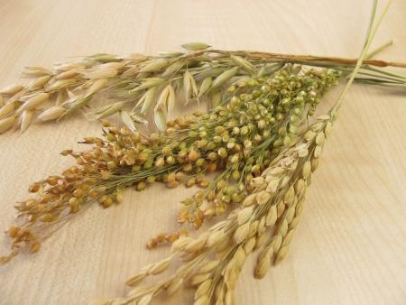 panicle: Panicle oats, panicle rice and panicle millet Stock Photo