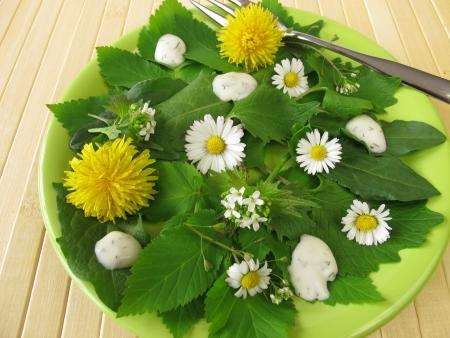 herbs wild: Ensalada con hierbas silvestres Foto de archivo
