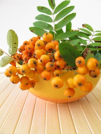 pome: Pome fruits of mountain ash