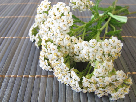 Bouquet of yarrow photo