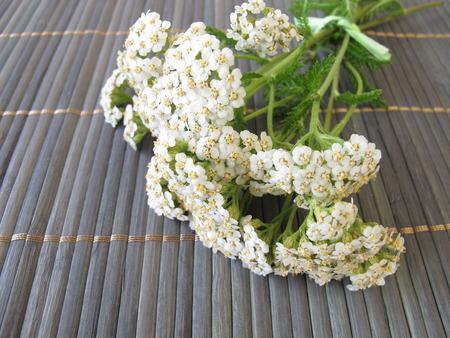 yarrow: Bouquet of yarrow Stock Photo