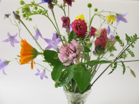 Bouquet of wild flowers photo