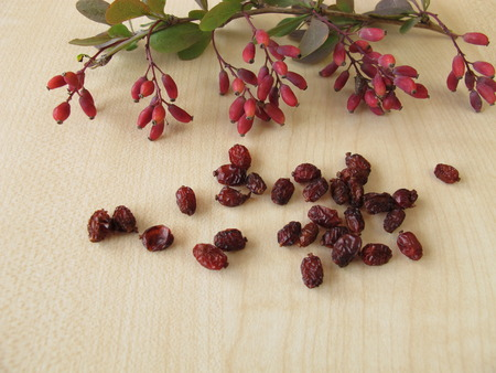 barberries: Barberry twigs and dried barberries Stock Photo