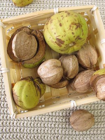 hickory nuts: Shellbark hickory nuts in small basket Stock Photo