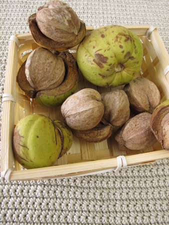 hickory nuts: Shellbark hickory nuts in small basket Stock Photo