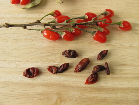 lycium: Fresh and dried goji berries