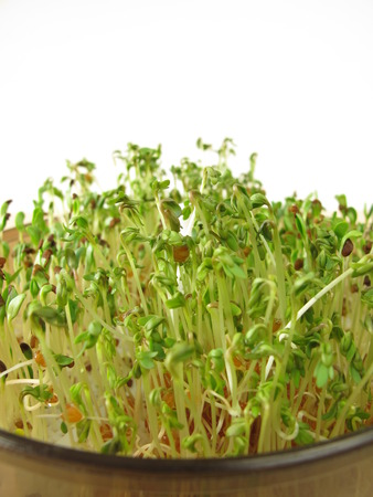 red clover: Shoots from red clover and cress Stock Photo
