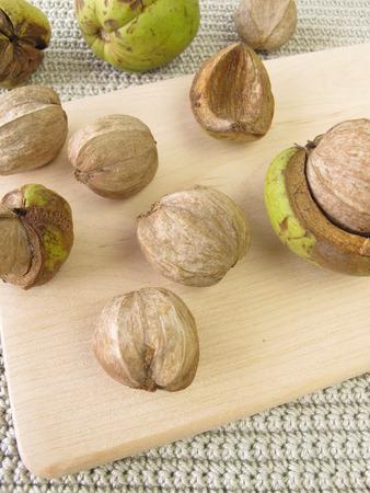 hickory nuts: Shellbark hickory nuts