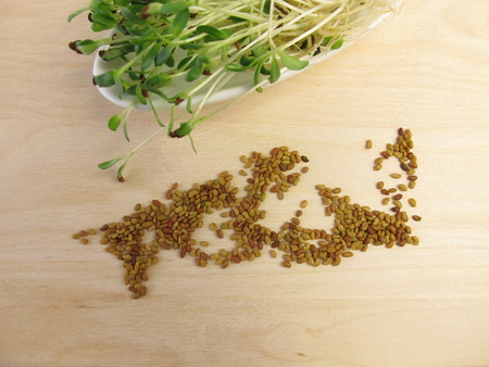 red clover: Red clover sprouts and seeds