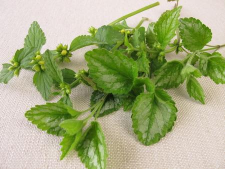 herbs wild: Hierbas silvestres ramo con deadnettle