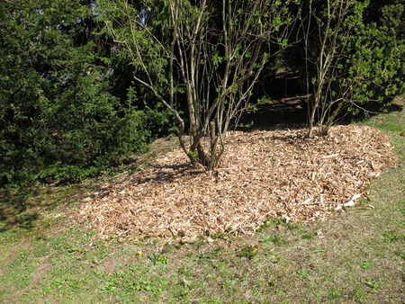 mulch: Wood chips as mulch layer under the bush
