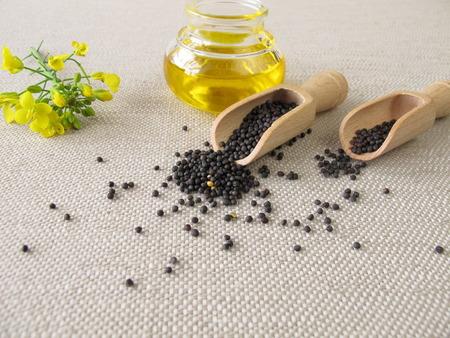 Canola oil and rapeseed Standard-Bild