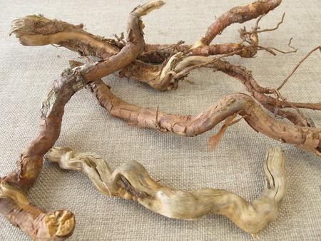crafting: Ra�ces de los �rboles para hacer a mano