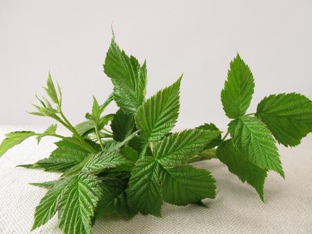 herbs: Frambuesa deja para el t� de hojas de frambuesa