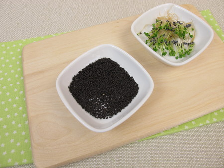 germinating: Basil sprouts and germinating seeds